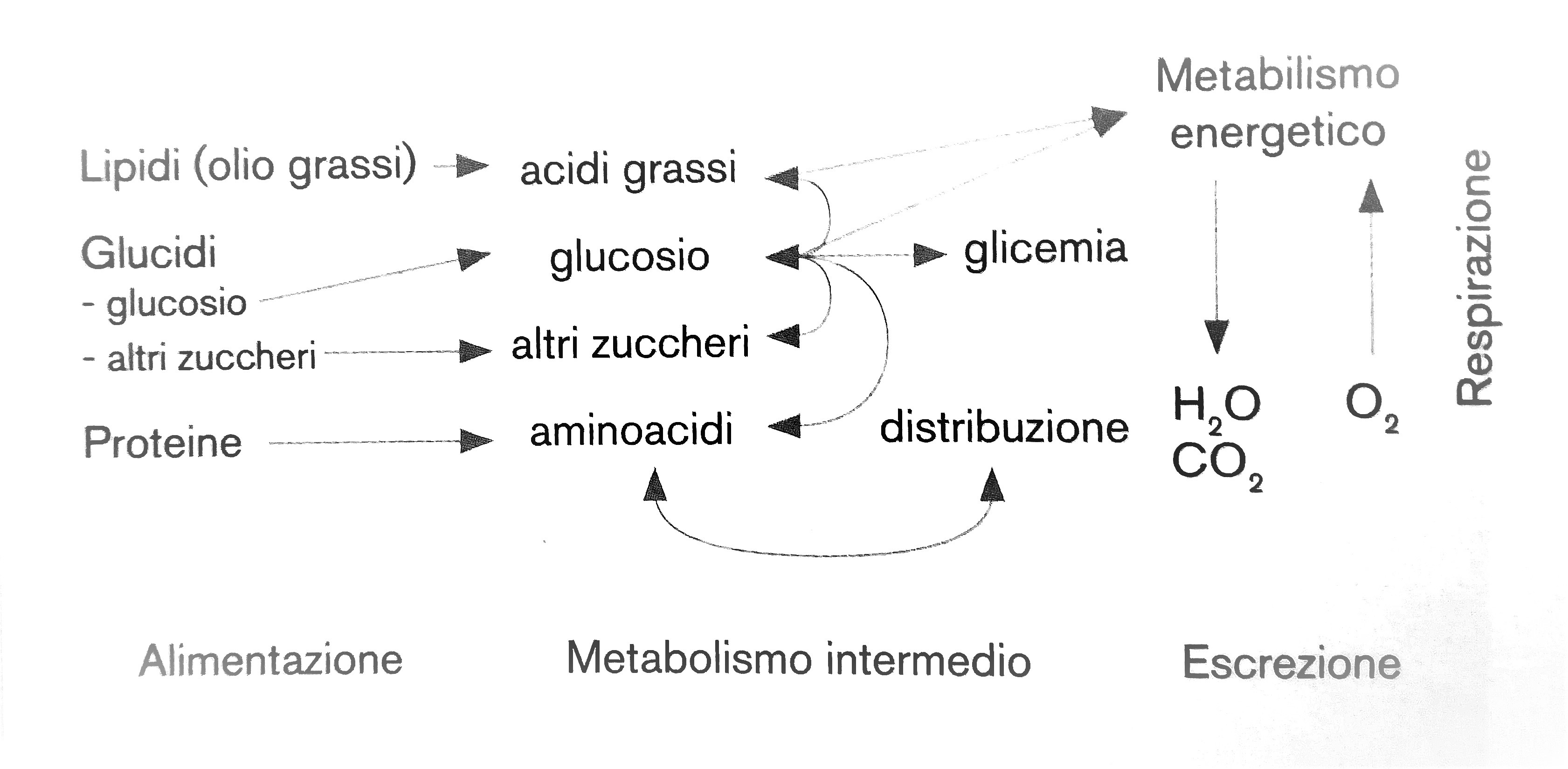 Il metabolismo energetico, istruzioni per l'uso - 365MTB..